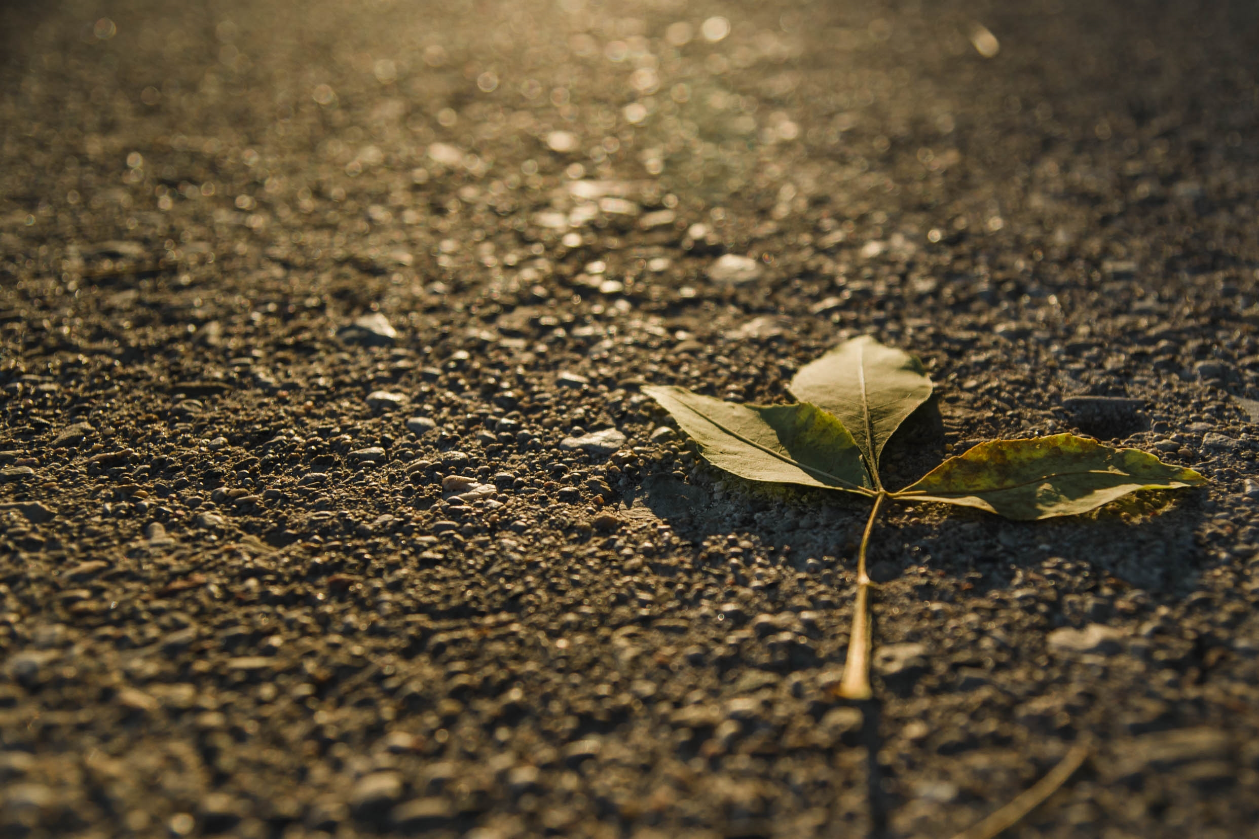 Nature (10).JPG