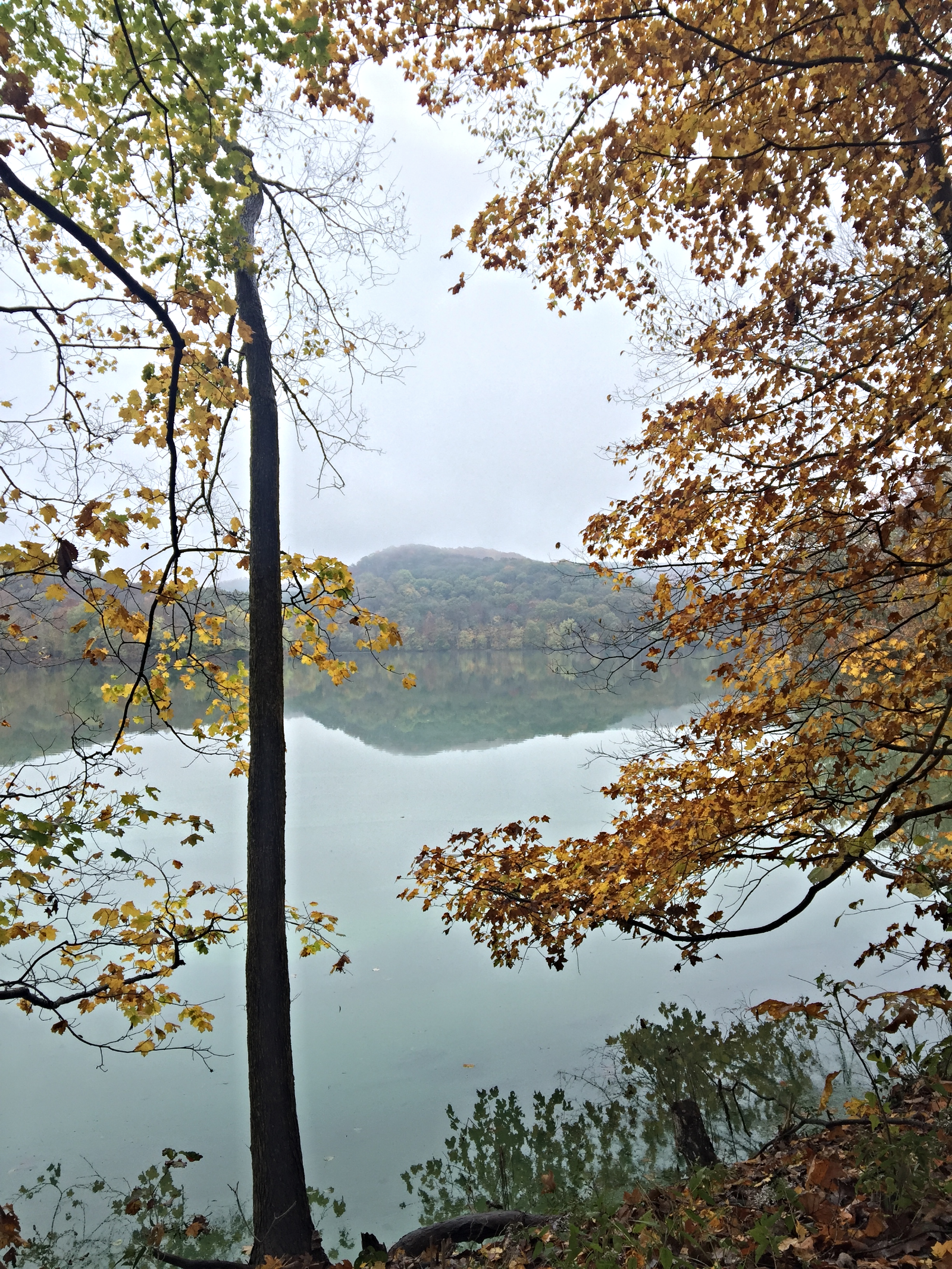 Picture of Radnor Lake courtesy of Brooke Stephens.