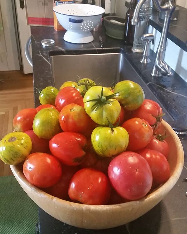 More 'maters ready to process into sauce!