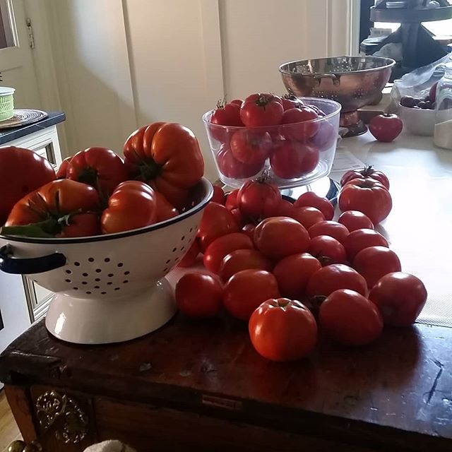 Time to can tomatoes...20.5# fresh from the garden