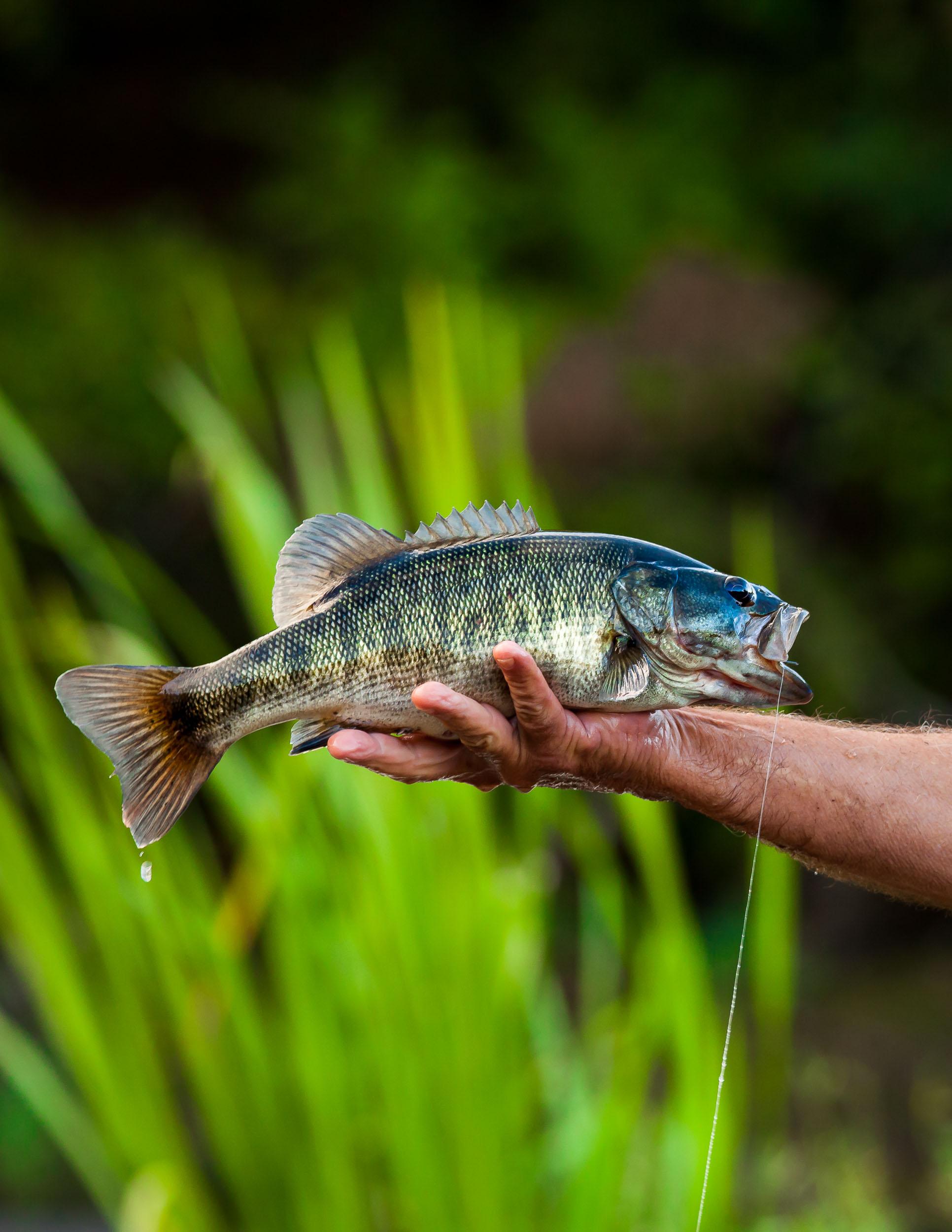 2018-10.fly-fishing-georgia-shoal-bass-david-cannon-photography-kent-edmonds-flint-river.blog (4 of 6).jpg