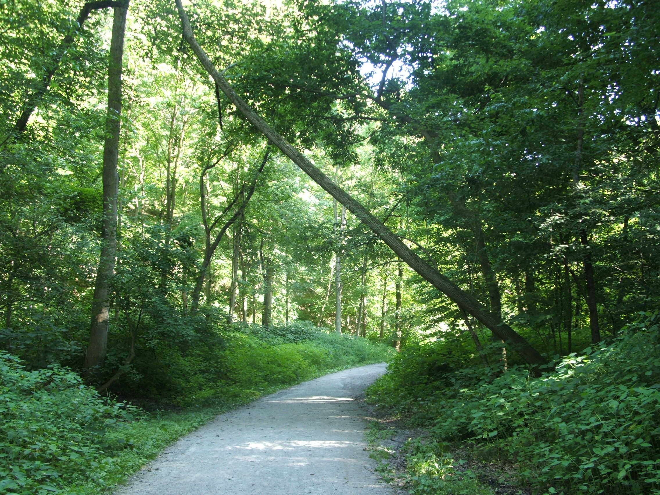 Pittsburgh_frick_park_trail.jpg