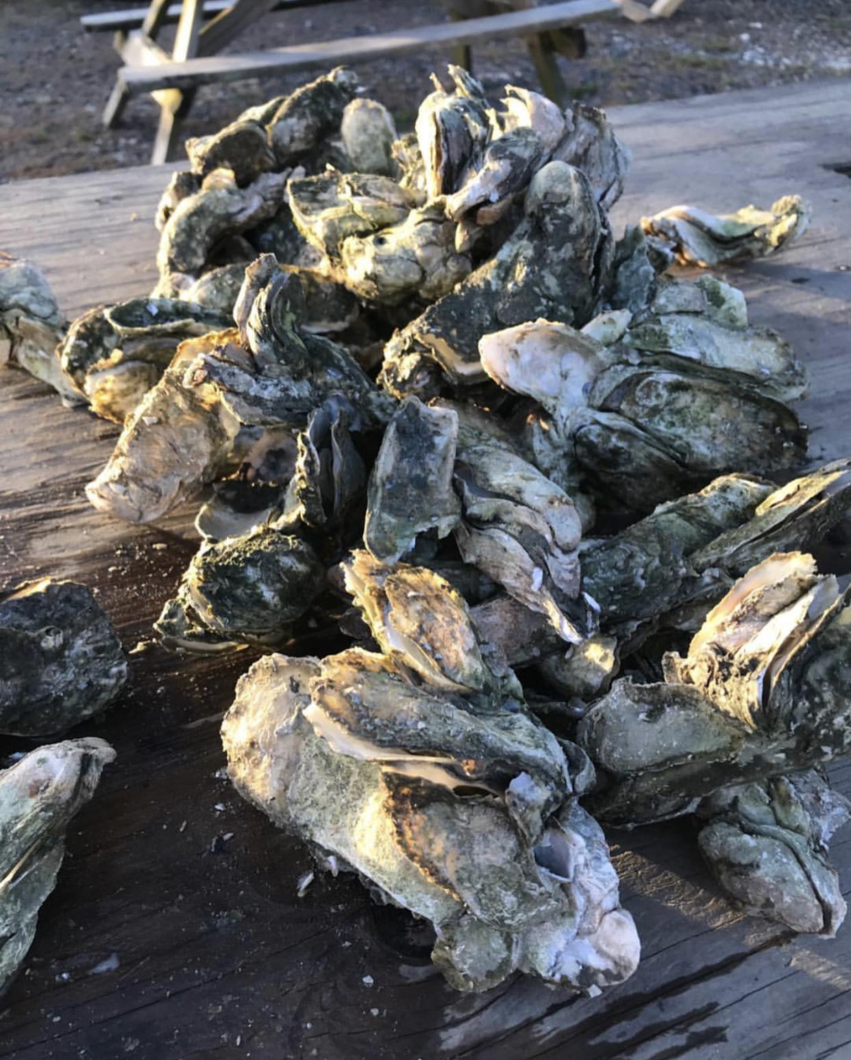 oysters bowens island