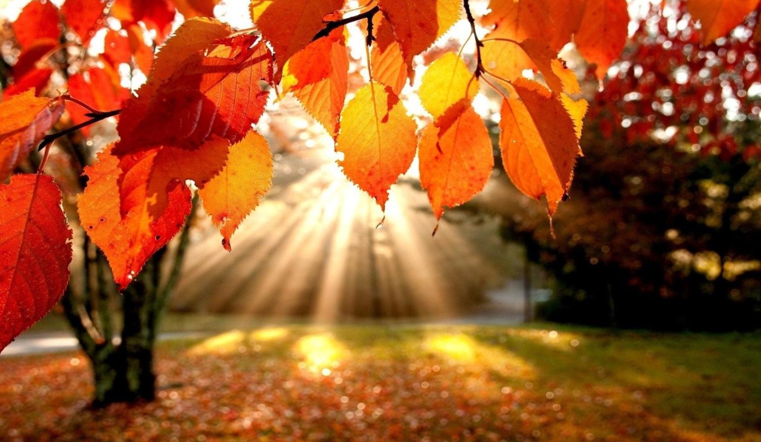 autumn light.PNG