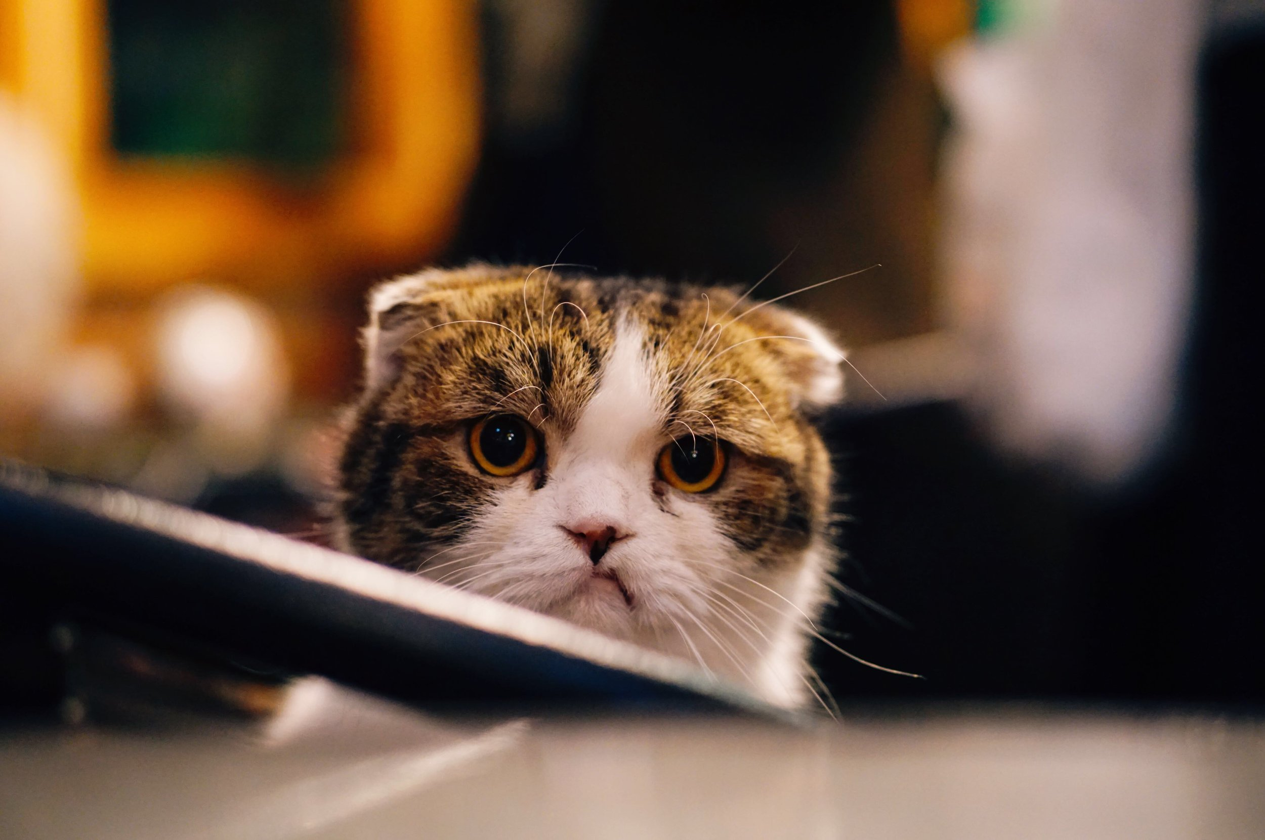 Like this cat, things can get frustrating sometimes when you're niching down in your business and it's not clicking.