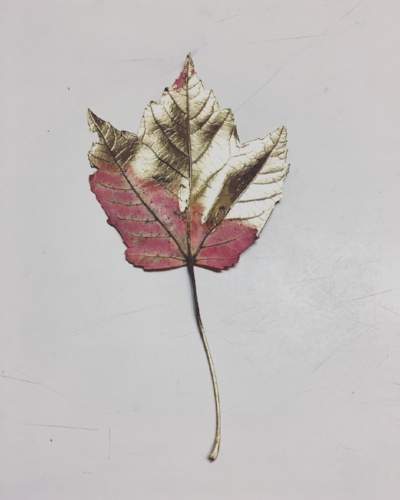 This leaf was collateral damage in my spraying, but I thought it looked pretty.