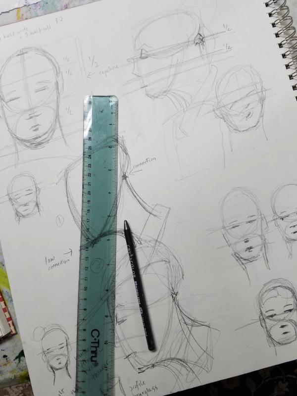 Facial proportion studies
