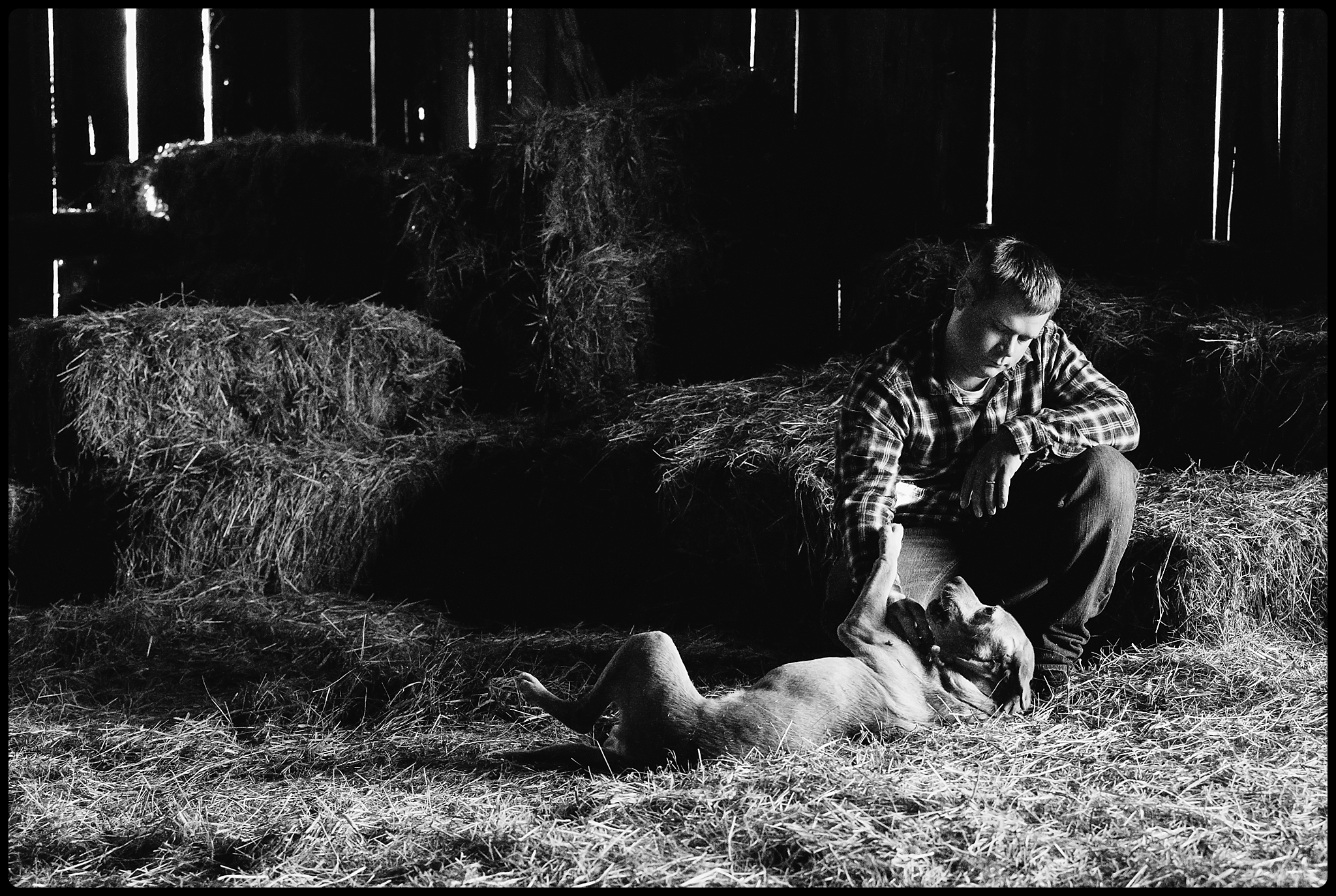 Man rubs dogs tummy in a barn.