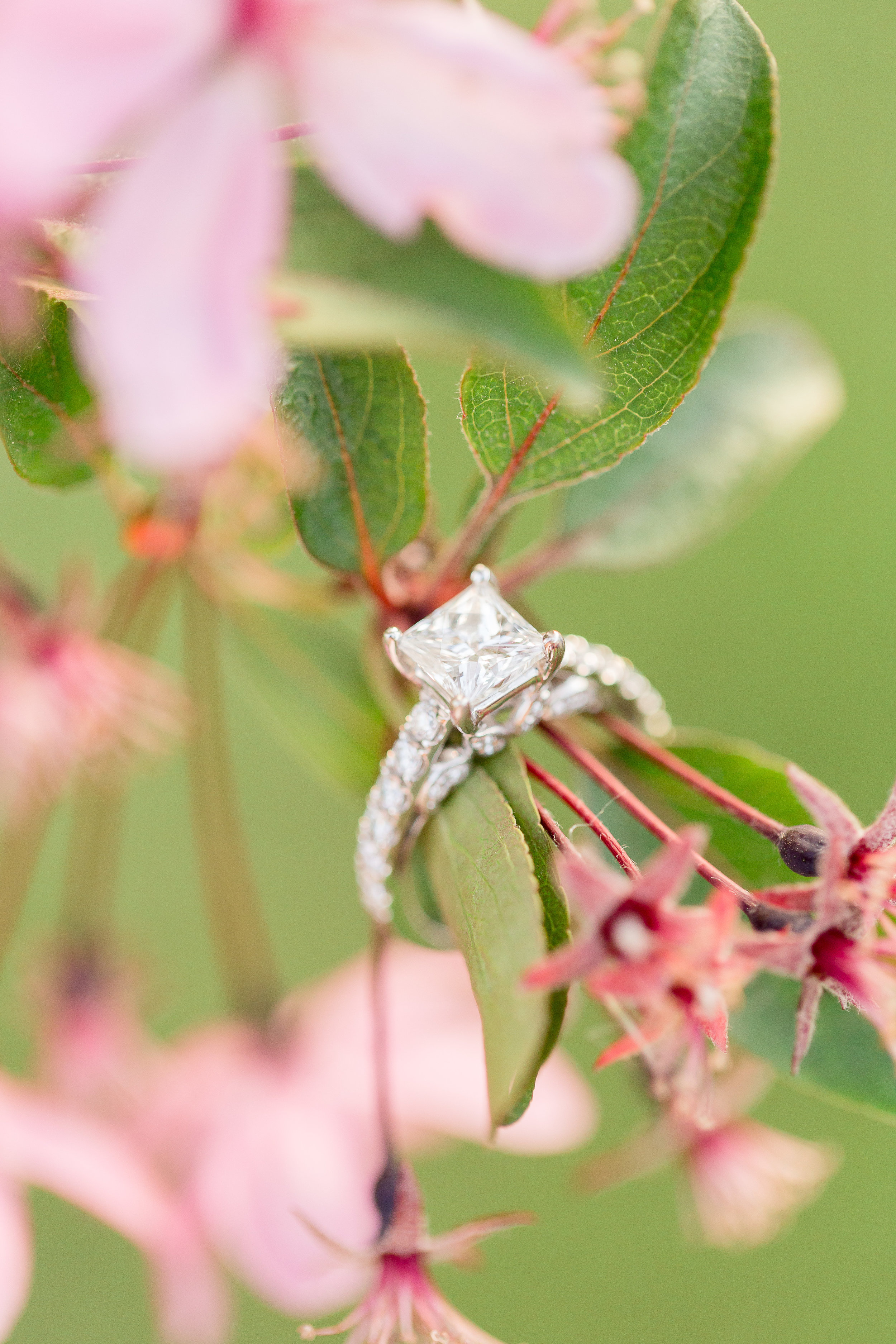 Abigail Berge Photography-engagement-81.jpg