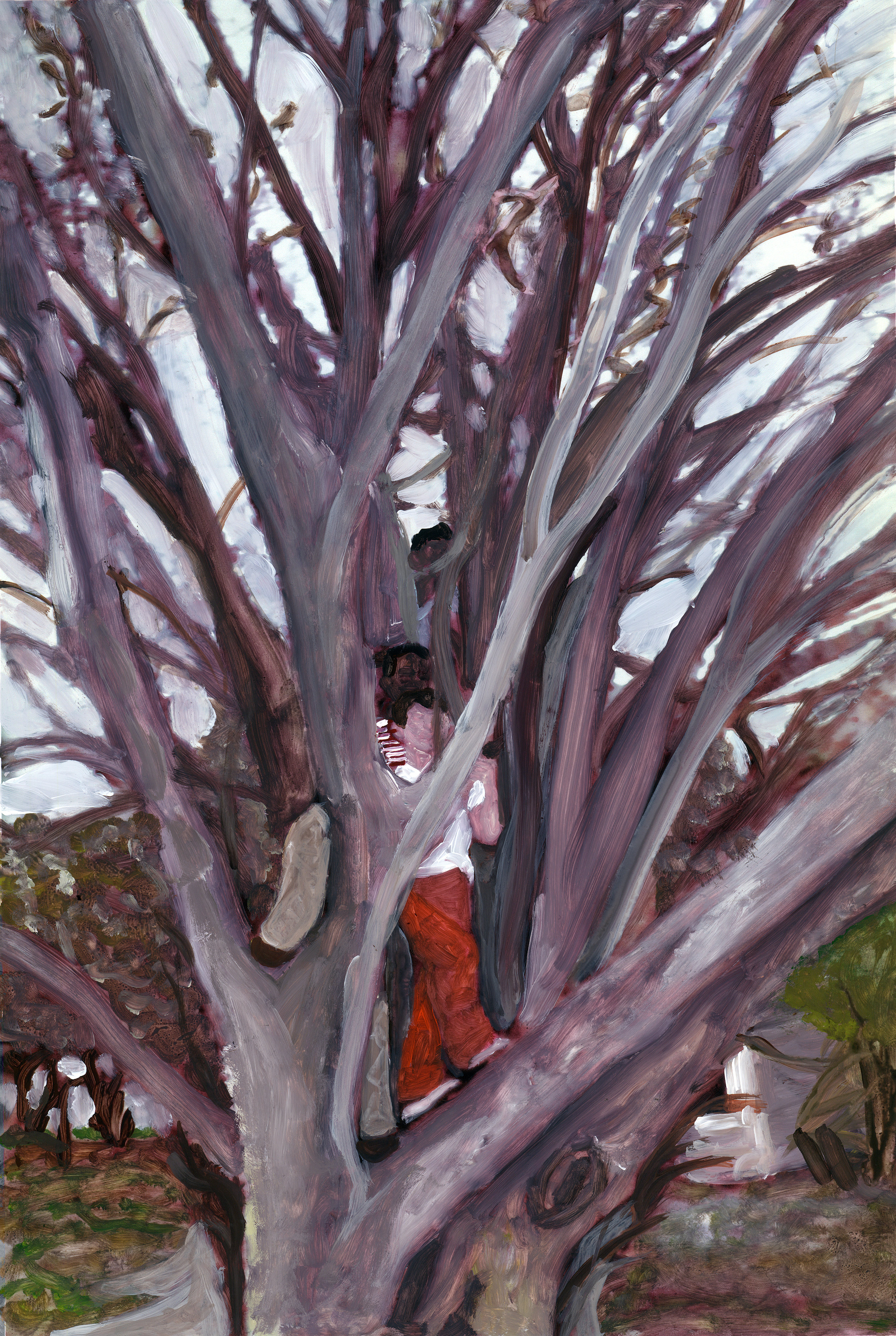 three boys in a tree