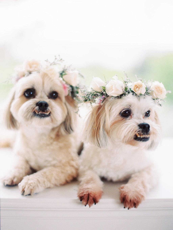 wedding-puppies-flower-crowns.jpg