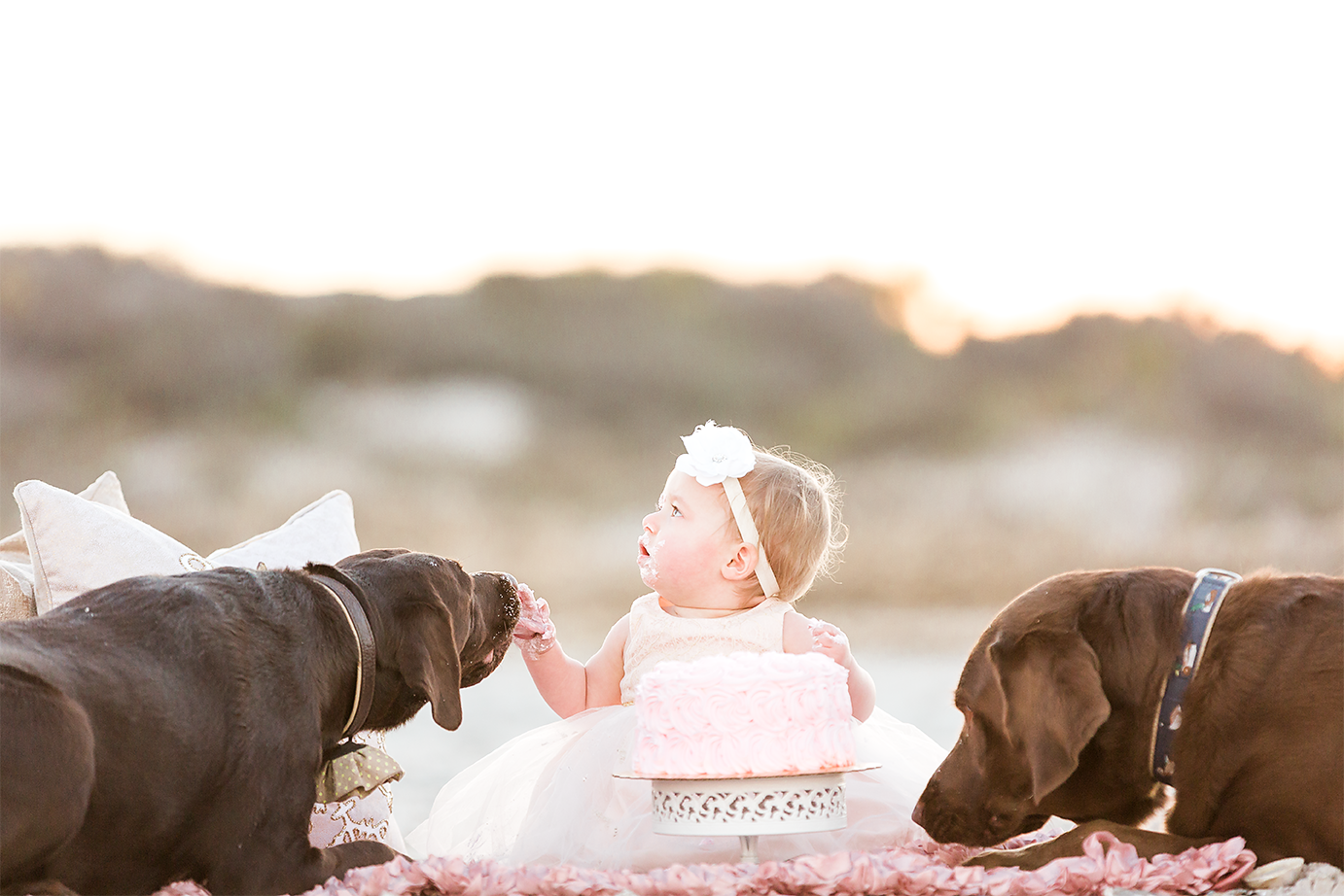 cake smash with dogs. Jacksonville fl family photographer