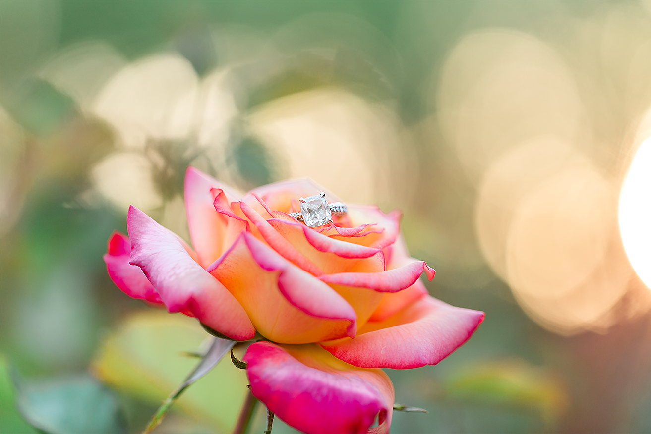 engagement ring picture on a rose