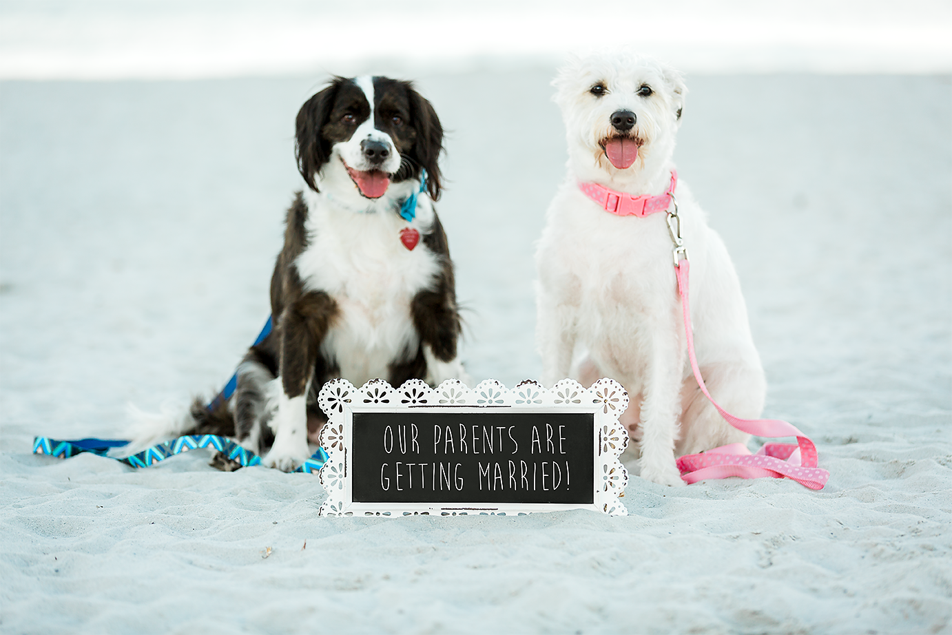 surprise proposal ideas with the dogs