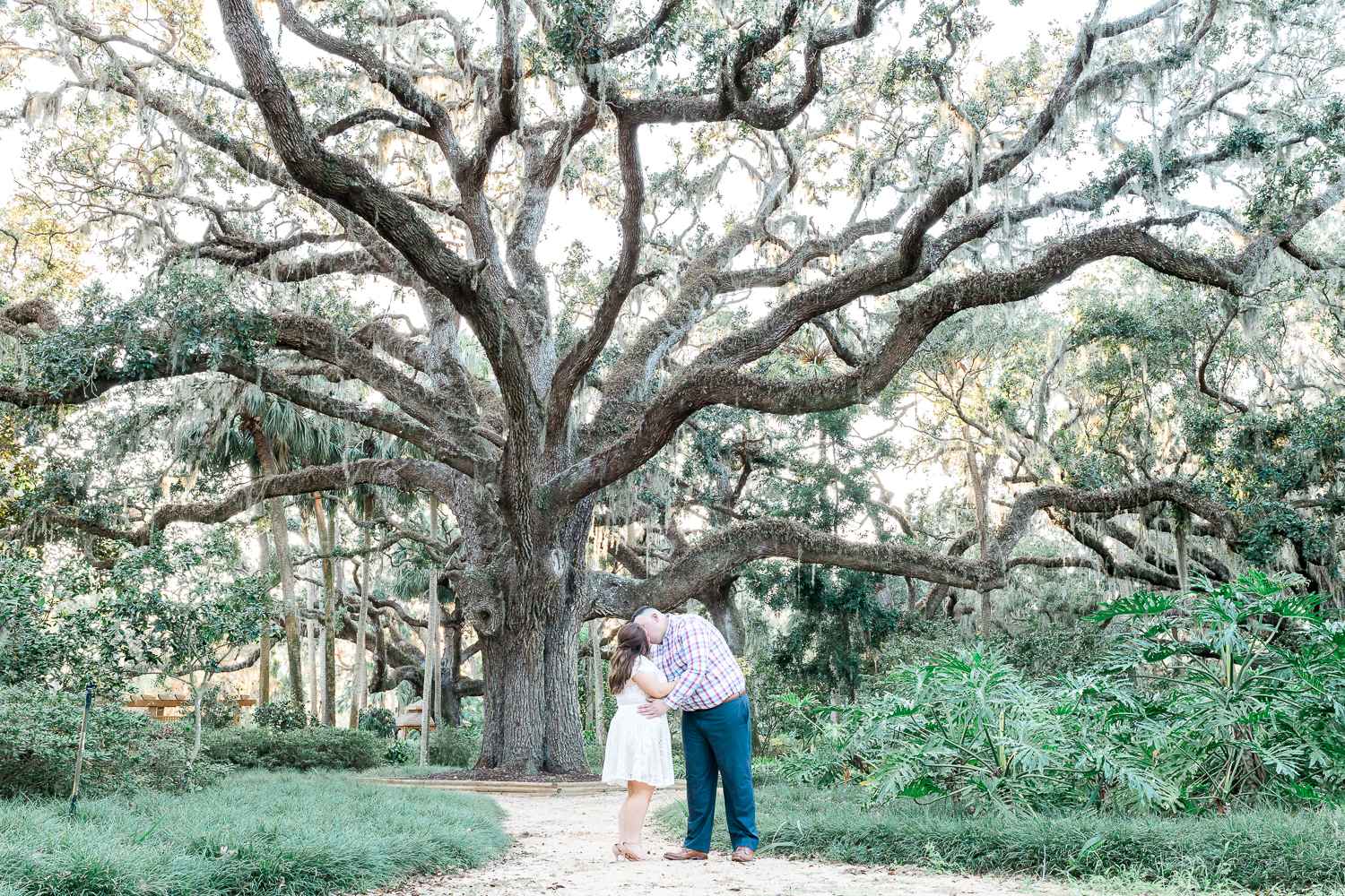 engagement pictures with big trees in washinton oaks gardens