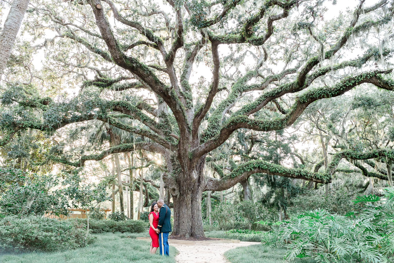 engagement pictures under a big tree