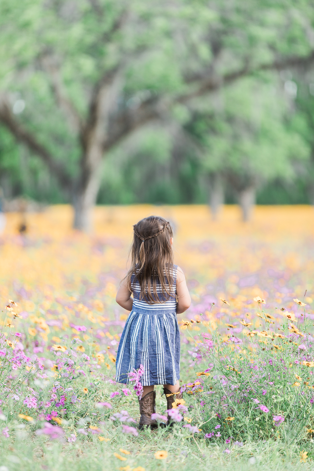flower field pictures
