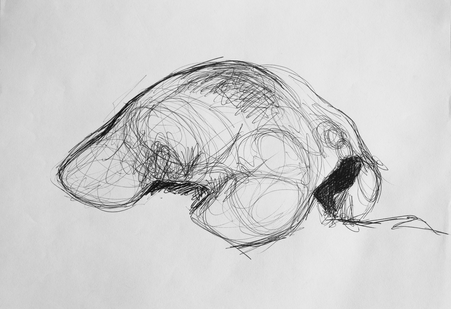 back-sketch-1.jpg