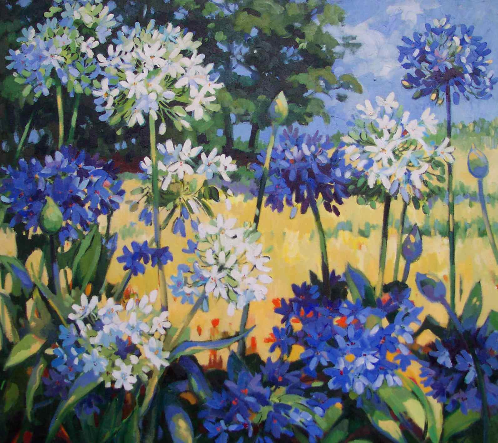 Agapanthus on the Hill