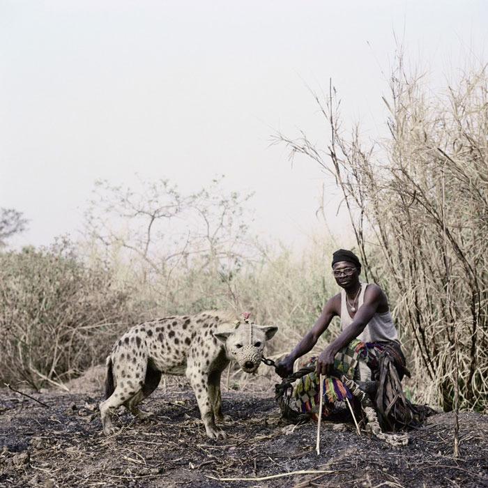 Hyena 3.jpg