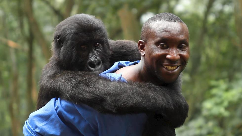 Virunga (2014) - Dirigido por Orlando von EinsiedelIMDB: 8.3Rotten Tomatoes: 100%