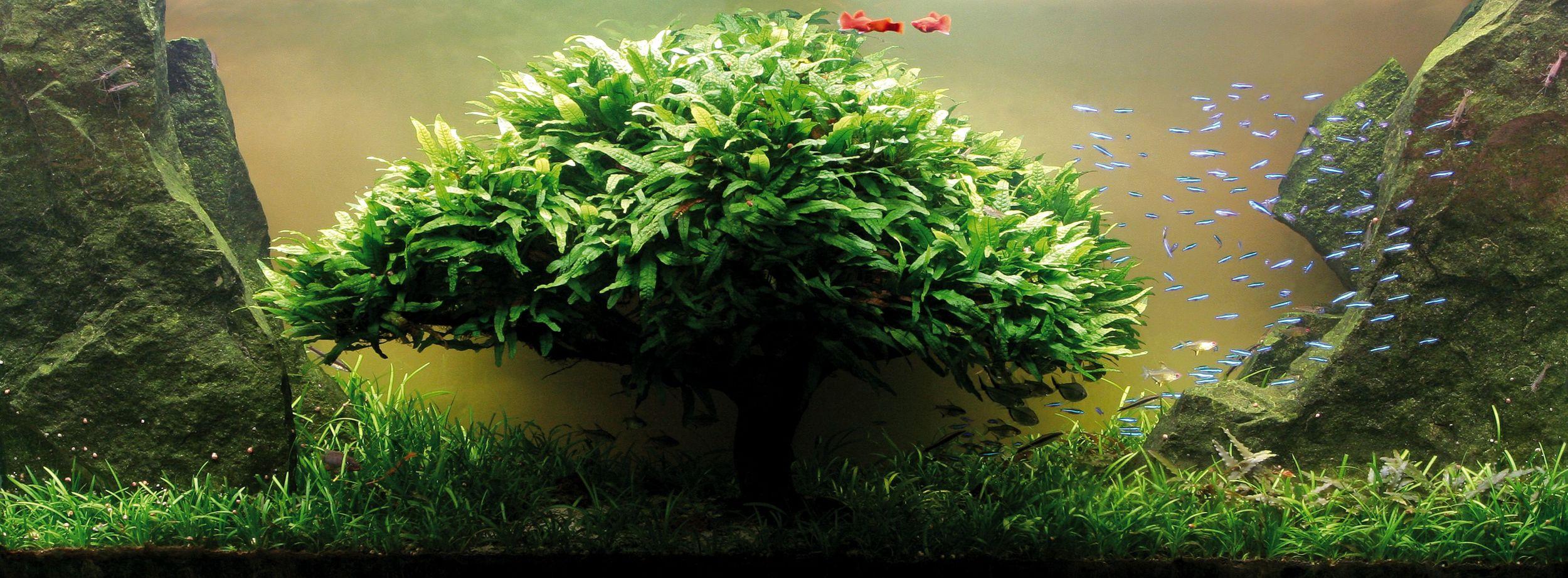 """2008 ADA Contest Praca pod tytułem: """"Drzewo elfów""""."""