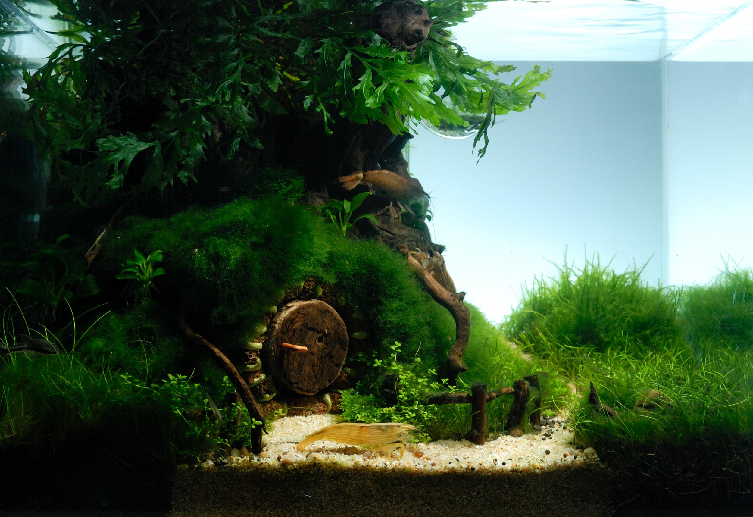 """2009 AGA Contest - III miejsce Praca pod tytułem: """"Hobbitowe Ziele""""."""