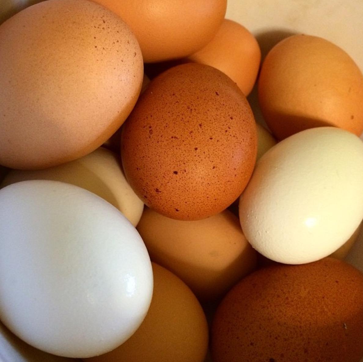 The incredible edible pastured egg.