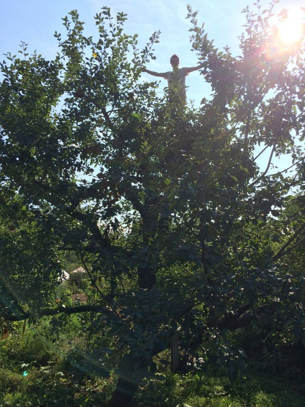 treetopnick