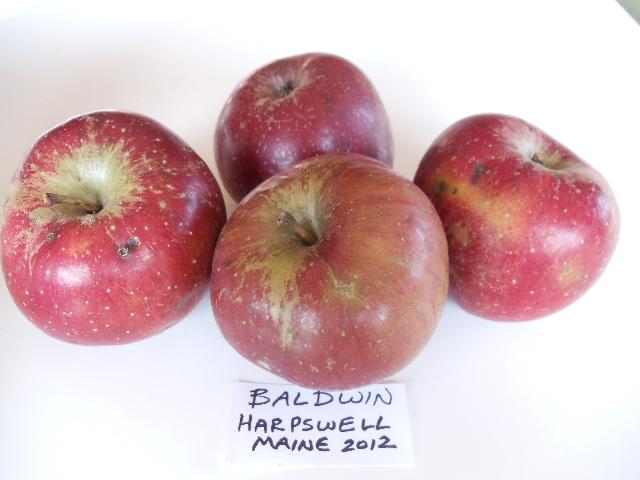 BaldwinHarpswell15