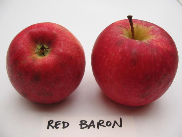 red-baron-bc.jpg