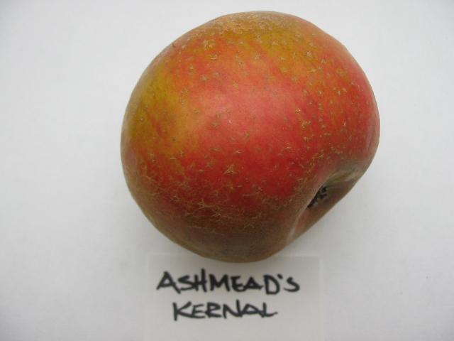 ashmeadskernal2011-3.jpg