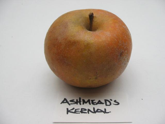 ashmeadskernal2011.jpg
