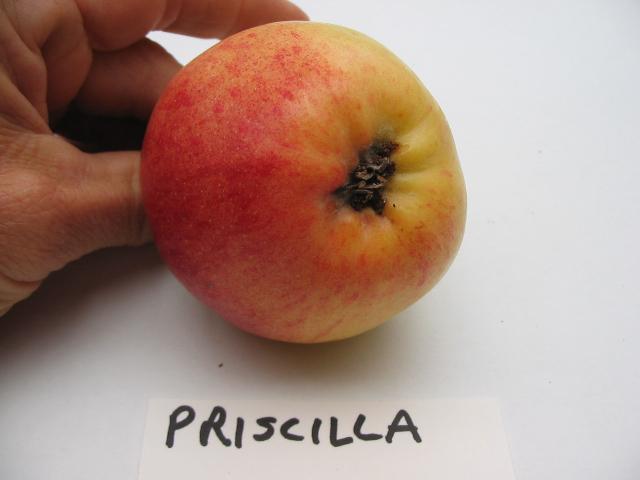 priscilla-basin.jpg