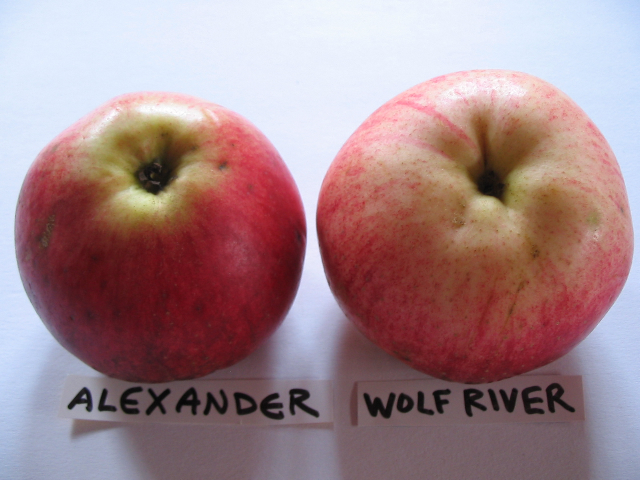 alexander_wolfriver2.jpg