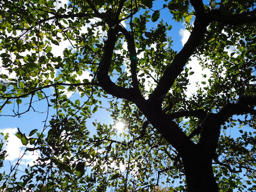 treesilhouette copy.JPG