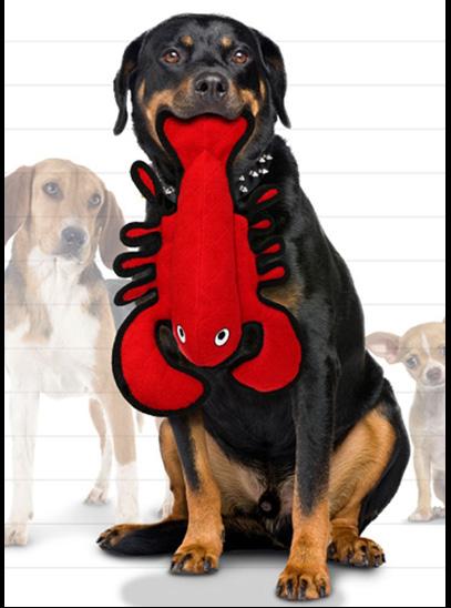 lobster 13.png