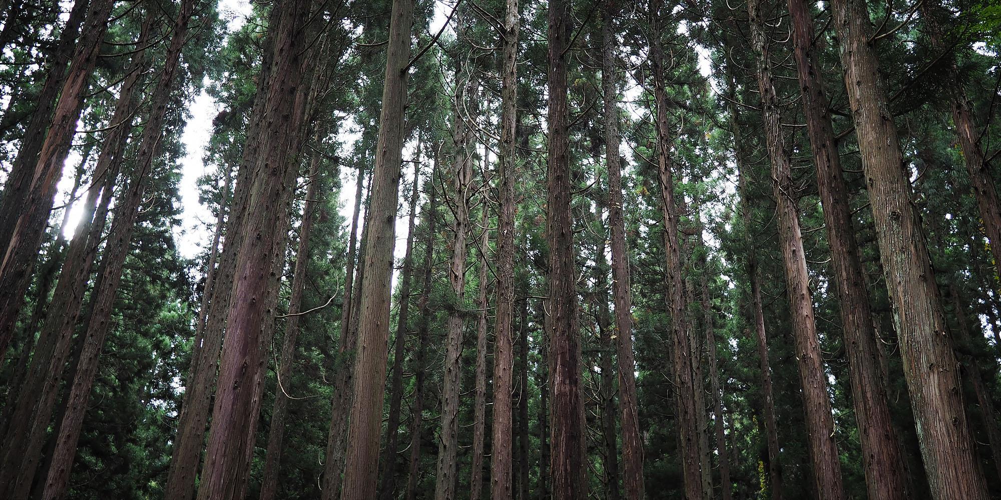 shirakawa-go5.jpg