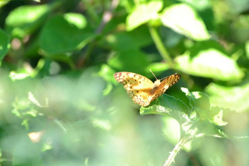 découverte de la riche faune endémique pendant la randonnée de la montagne du Morne Ile Maurice : gagnebin