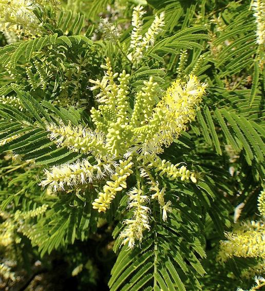 découvrir des plantes endémiques sur la montagne du Morne Brabant Ile Maurice