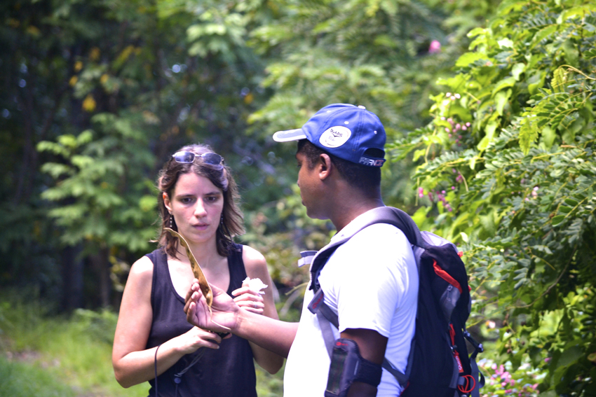 our guide explaining you about plants on Le Morne Mountain
