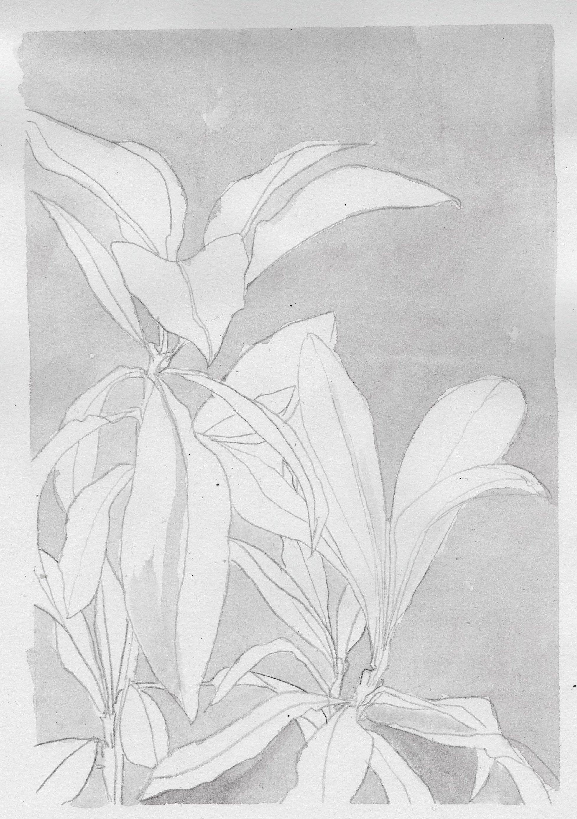 feuilles n&b070.jpg