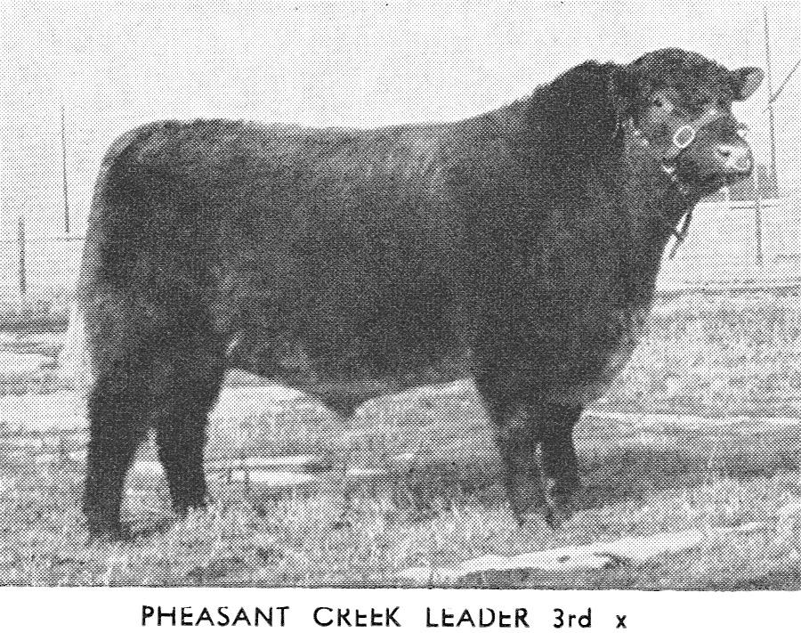Pheasant Creek Leader 3rd