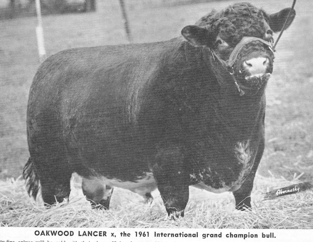 Oakwood Lancer,  The 1961 International Grand Champion bull