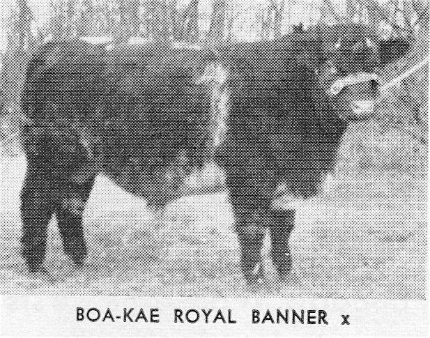 BoaKae Royal Banner
