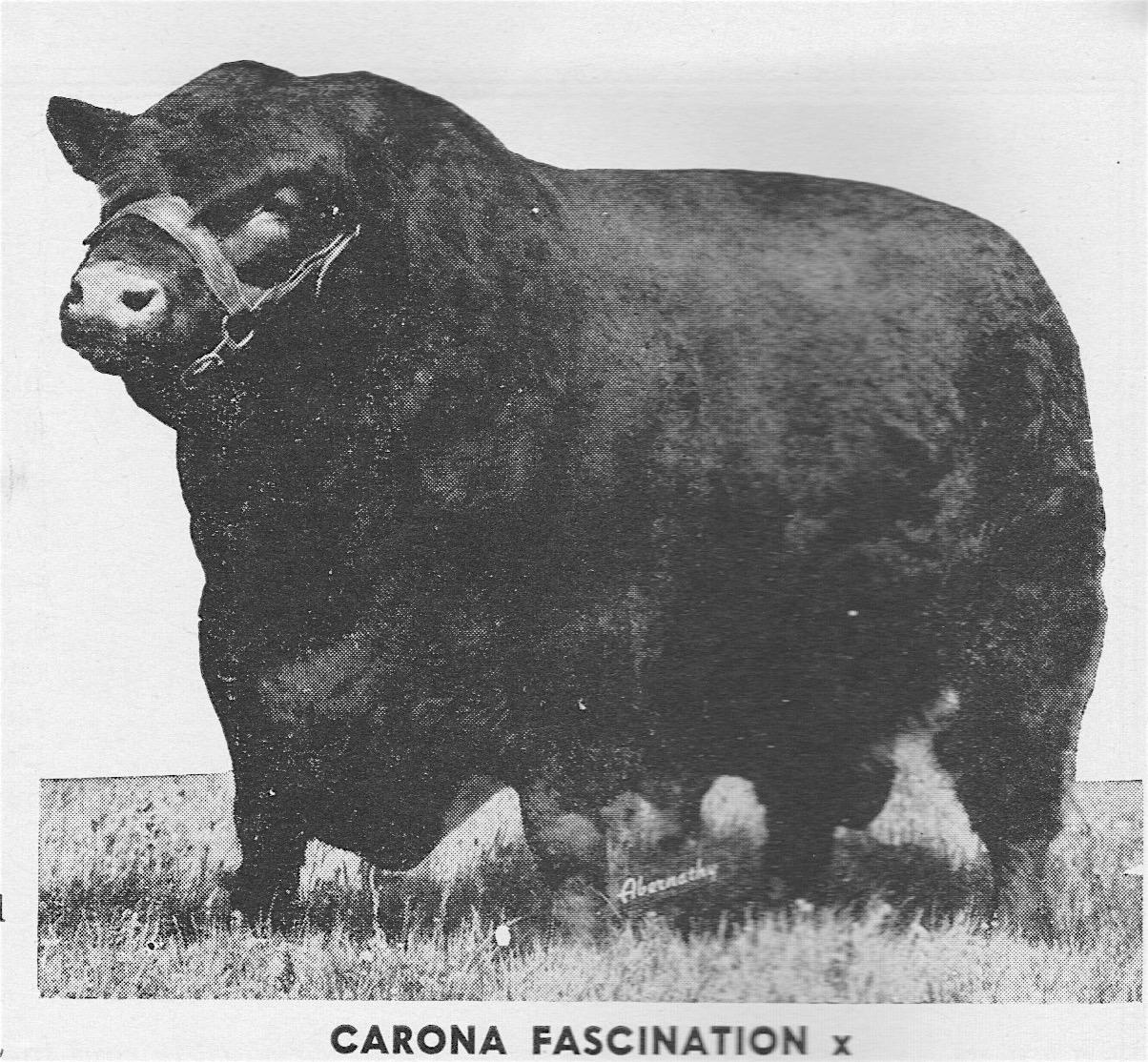 "Carona Fascination--""Greatest International Champion sire of international champions"