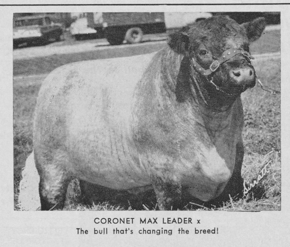 Coronet Max Leader