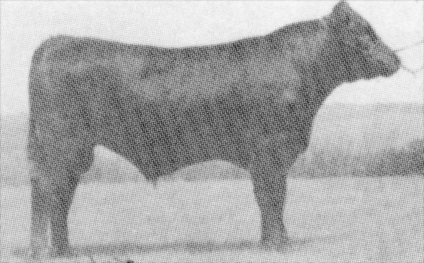 DCC Prophet X--he was used extensively in Australia