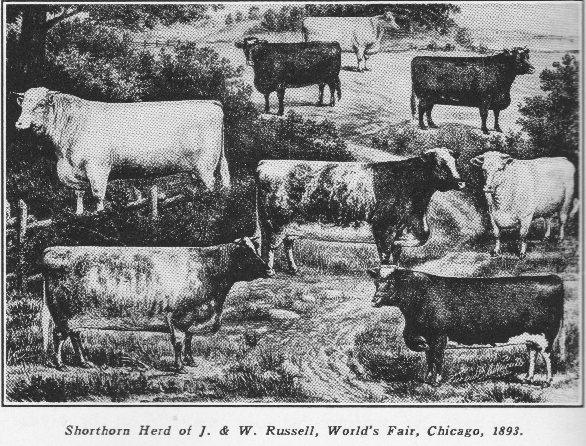 World's Fair, Chicago 1893