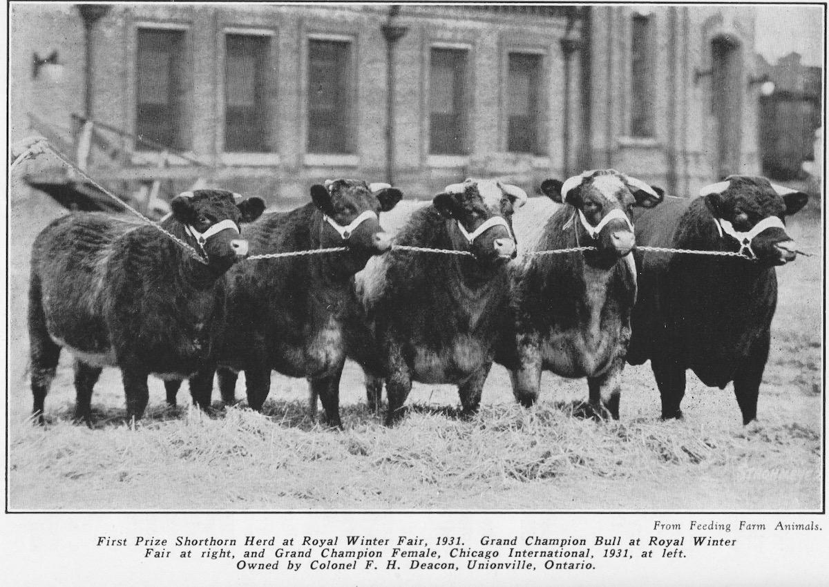 Royal Winter Fair, Canada 1931